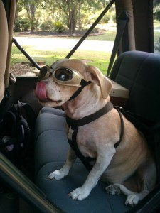 Doggles are dog goggles
